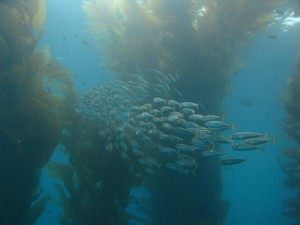 Channel Islands Sea Conditions and Weather - Worldwide Diving Adventures